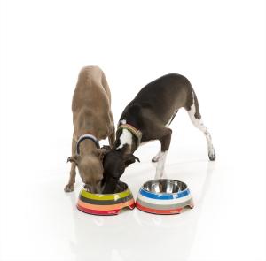 犬用フードボウル クアトロ