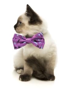 犬猫用ボウタイ プリンス
