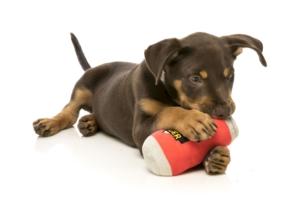 犬猫用 おもちゃ/ぬいぐるみ ビア