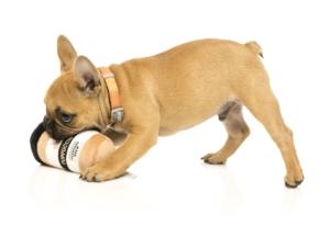 犬猫用 おもちゃ/ぬいぐるみ パップチーノコーヒー