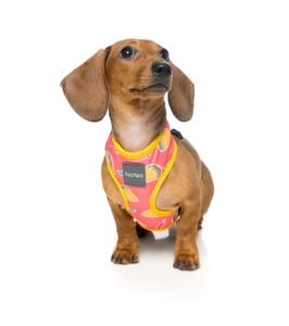 犬用 ソフトハーネス ヘイエッセ