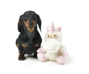 犬猫用 おもちゃ/ぬいぐるみ