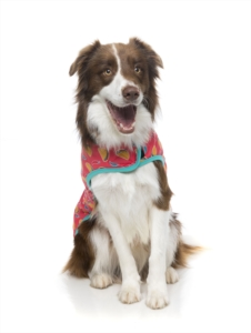 犬用 ラップベスト ヘイエッセ