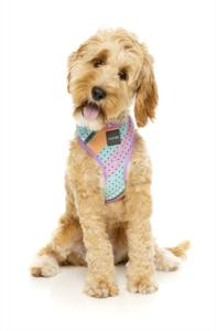 犬用 ソフトハーネス フットルース