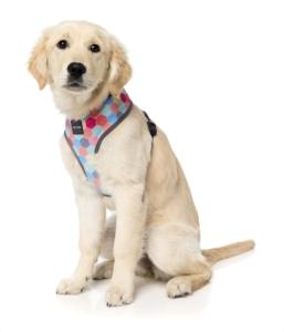 犬用 ソフトハーネス ハイヴ