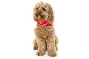 犬用 ラップベスト ジャイプル