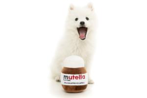 犬猫用 おもちゃ/ぬいぐるみ ムテラ