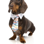 犬猫用 ネクタイ ロードカーナビー