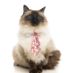 犬猫用 ネクタイ スリーピータイム