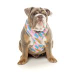 犬用 ソフトハーネス ジギー