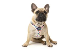 犬用 ソフトハーネス ジェンガ