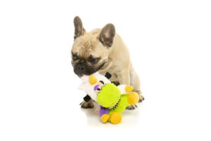 犬猫用 おもちゃ/ぬいぐるみ プロフェッサー ゾンビホーン