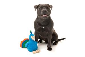 犬猫用 おもちゃ/ぬいぐるみ ショーボート(くじゃく)