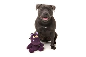 犬猫用 おもちゃ/ぬいぐるみ ヘフティ(かば)と犬