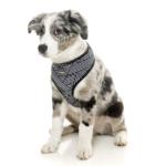 犬用 ソフトハーネス ノースコート