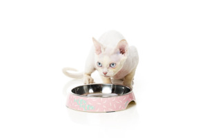 猫食器 フェザーストーム