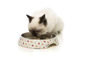 猫食器 スシ デライト