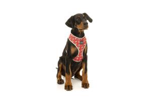 犬用 ソフトハーネス フレッシュキック